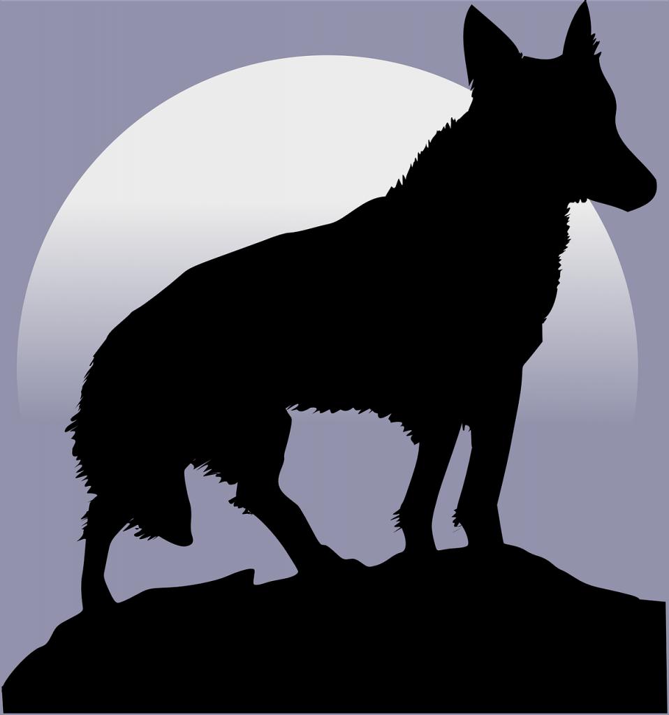 Wolf Termin Titel